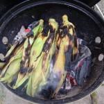 Majskolv grillad i glöden